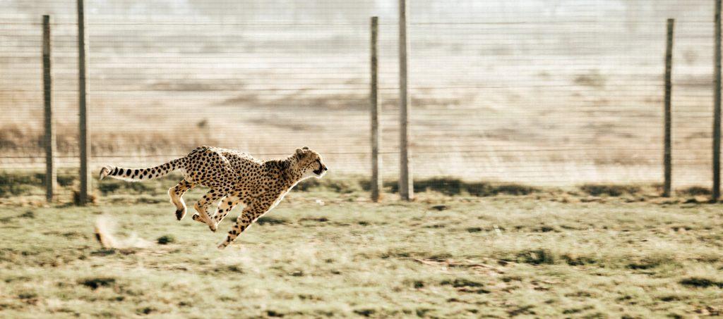 lichamelijk fit en gezond tijdens de lockdown met sprints